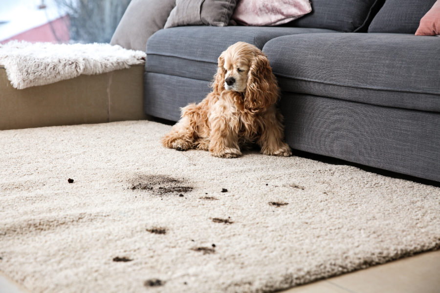 pet friendly carpets